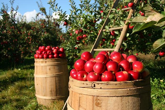 リンゴ アップル アトピー デトックス